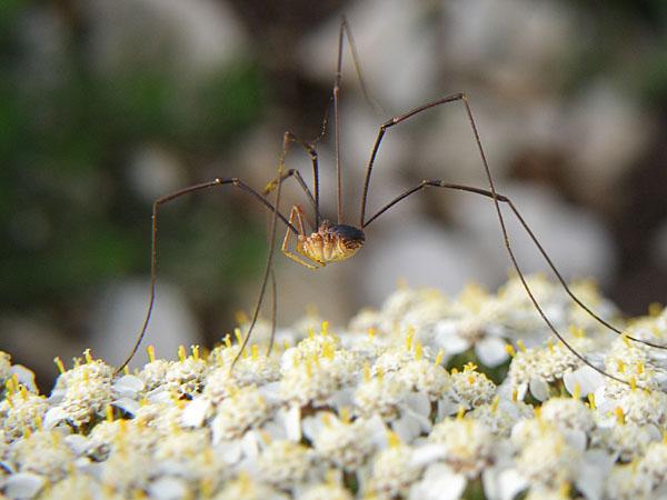 comment se débarrasser des araignées ? - supertoinette